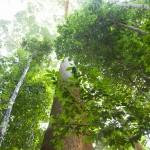 khao sok // www.juliadresch.com