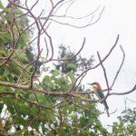 Yala National Park // Sri Lanka